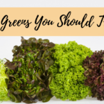 Different types of lettuce greens